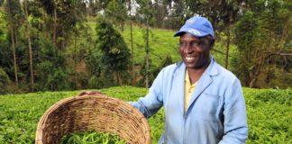 кенийский фермер